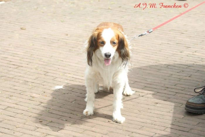 12-hondstrouw-publiek-met-dit-weer